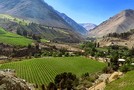 Agriculture in Chile - Wikipedia