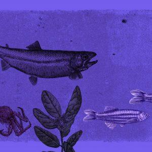 Animales-Refugio-de-Científicos2-1024x522