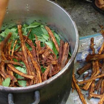 ¿Pueden los efectos espirituales de la ayahuasca ser explicados a través de la ciencia?