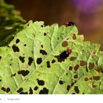 Neurocientíficos identifican que plantas y animales poseen el mismo neurotransmisor que detecta el daño en el organismo