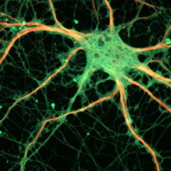 Regenerar neuronas en personas adultas, ¿es eso posible?